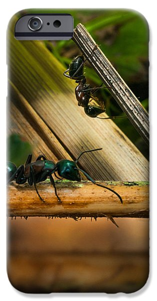 Ant iPhone Cases - Ants Adventure 2 iPhone Case by Bob Orsillo
