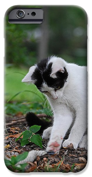 Pictures Of Cats Photographs iPhone Cases - Anything That Moves iPhone Case by Skip Willits