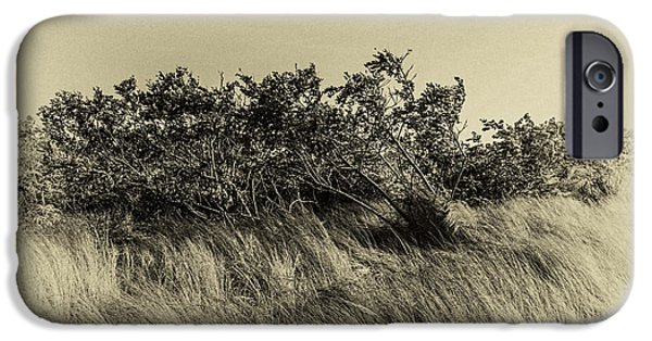 Bayside iPhone Cases - Apollo Beach Grass iPhone Case by Marvin Spates