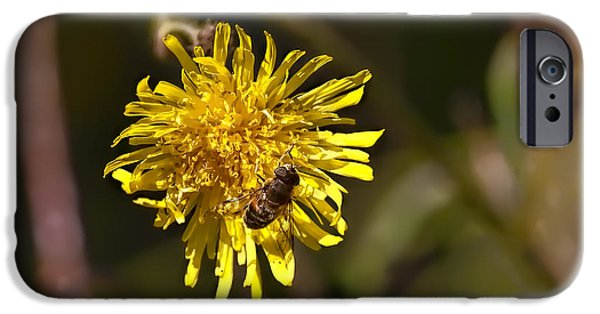 Applaud iPhone Cases - Applauding - Bee sitting in a yellow flower holding its front legs as applauding iPhone Case by Leif Sohlman