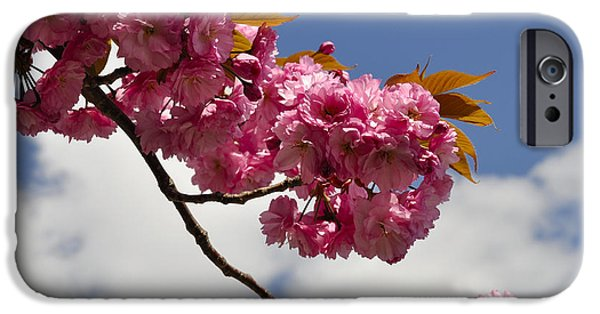 Prescott Digital iPhone Cases - Apple Beauty iPhone Case by Jim Brage
