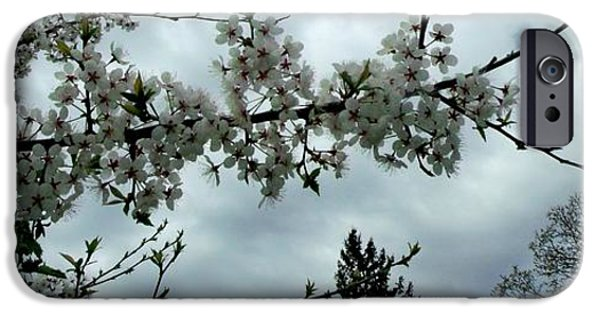 Arkansas iPhone Cases - Apple Blossom against the Sky iPhone Case by Gail Matthews