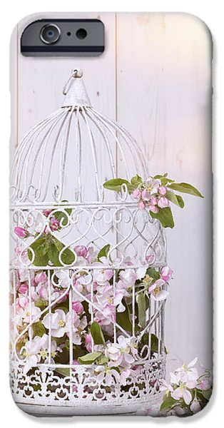 Bird Cage iPhone Cases - Apple Blossom iPhone Case by Amanda And Christopher Elwell