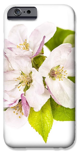 Apple blossom iPhone Case by Elena Elisseeva