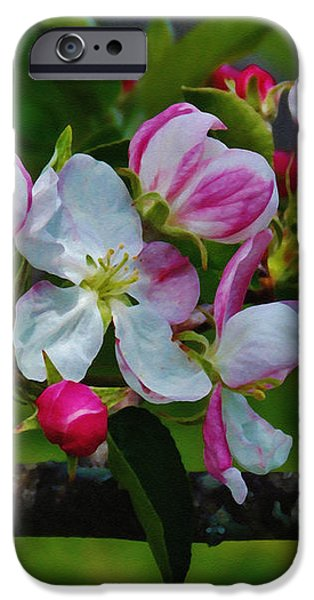 Rural iPhone Cases - Apple Blossom Time iPhone Case by Anita Faye