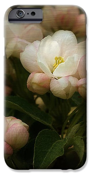 Apple Blossom Time iPhone Case by Mary Machare