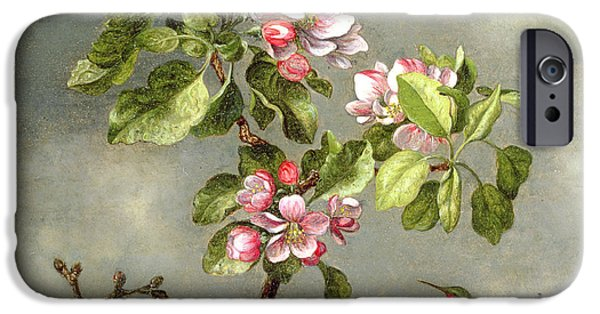 In Bloom Paintings iPhone Cases - Apple Blossoms and a Hummingbird iPhone Case by Martin Johnson Heade