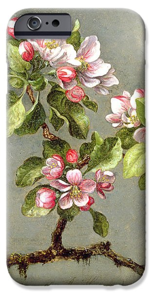 Apple Blossoms and a Hummingbird iPhone Case by Martin Johnson Heade