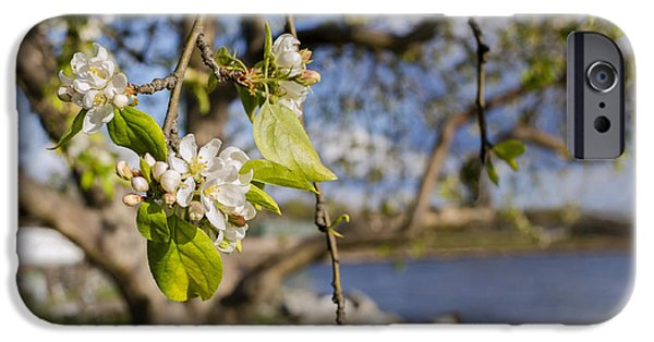 Hudson River iPhone Cases - Apple Blossoms by the Hudson River iPhone Case by Marianne Campolongo