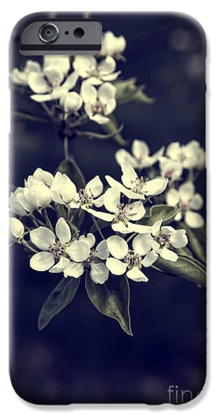 Poverty iPhone Cases - Apple Blossoms iPhone Case by Edward Fielding