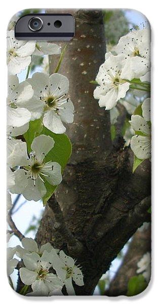 Apple Blossoms iPhone Case by Randi Shenkman
