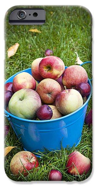 Pail iPhone Cases - Apple harvest iPhone Case by Elena Elisseeva