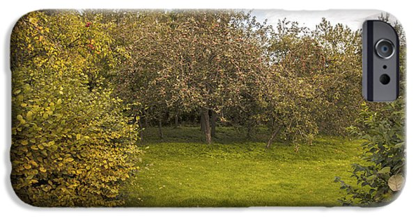 Harvest Time iPhone Cases - Apple Orchard iPhone Case by Amanda And Christopher Elwell