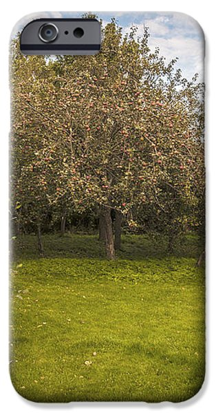 Apple Orchard iPhone Case by Amanda And Christopher Elwell