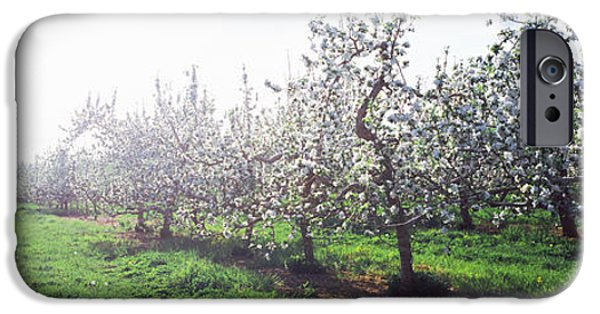 Apple Orchard iPhone Cases - Apple Orchard, Hudson Valley, New York iPhone Case by Panoramic Images