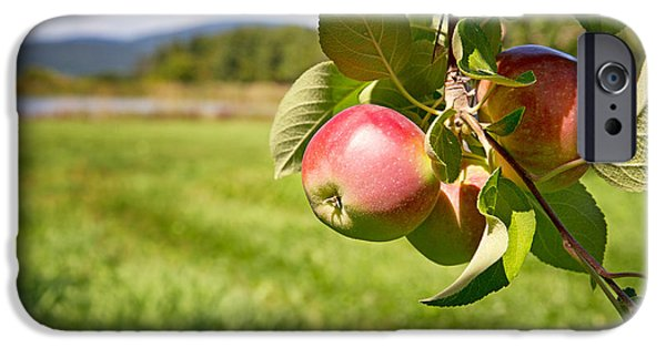 Apple Orchard iPhone Cases - Apple orchard iPhone Case by Jane Rix