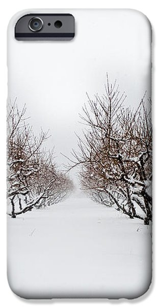 Apple Orchard iPhone Case by Ken Marsh