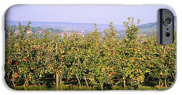 Apple Orchard iPhone Cases - Apple Trees In An Orchard, Weinsberg iPhone Case by Panoramic Images