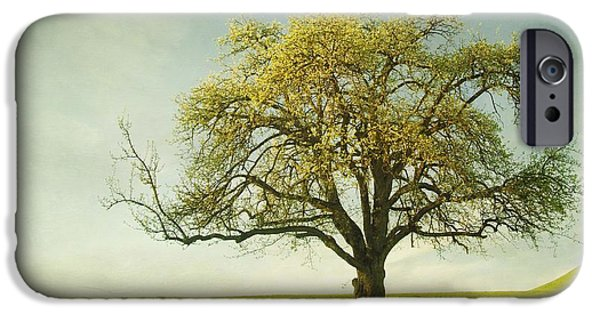Apple Trees iPhone Cases - Appletree iPhone Case by Priska Wettstein