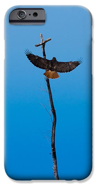 Redtail Hawk iPhone Cases - Approaching Perfection iPhone Case by Ernie Echols