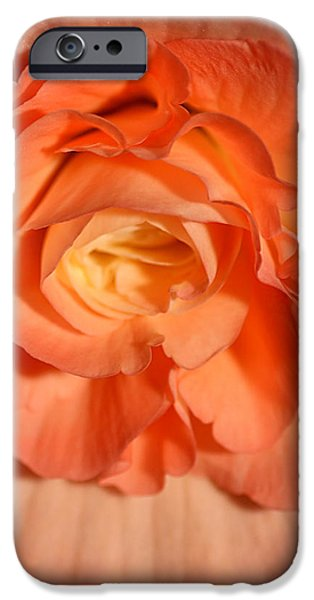 Apricot Pink Tuberous Begonia iPhone Case by Carole-Anne Fooks