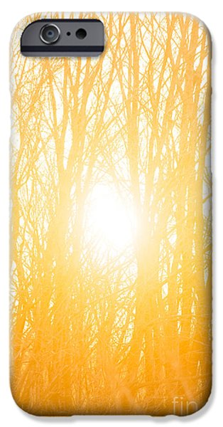 Sun Flare iPhone Cases - April Sunrise iPhone Case by Diane Diederich