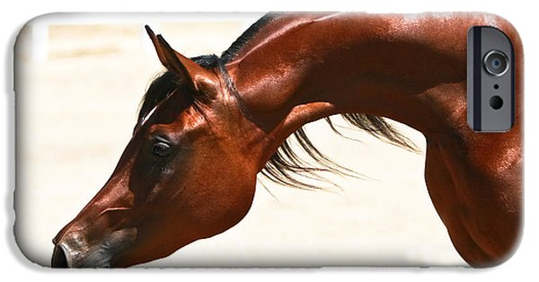Quarter Horse iPhone Cases - Arabian Mare iPhone Case by Holly Martin