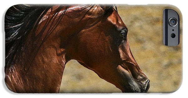 Thoroughbred iPhone Cases - Arabian Mare II iPhone Case by Holly Martin