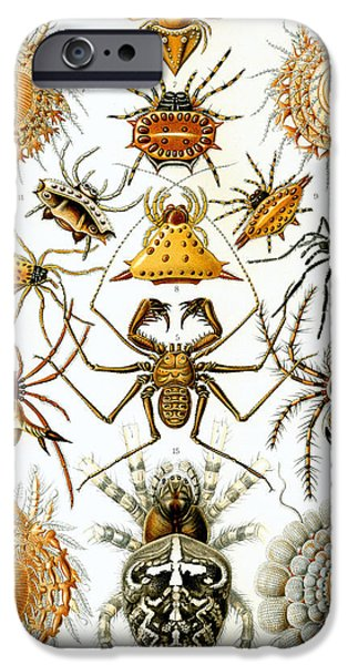 Arachnida iPhone Cases - Arachnida iPhone Case by Nomad Art And  Design