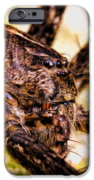 Spider iPhone Cases - Arachnophobia iPhone Case by Bob Orsillo