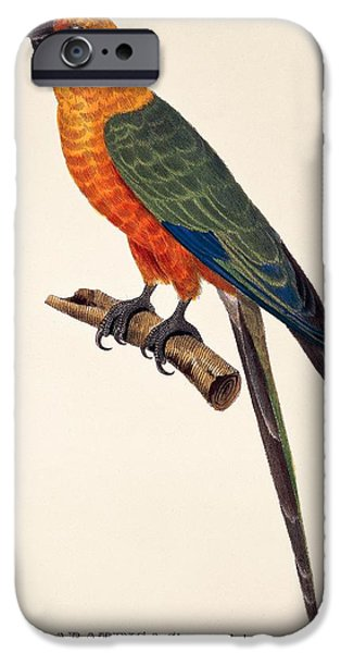 Vibrant Colors Drawings iPhone Cases - Aratinga Chrysocephalus  iPhone Case by German School