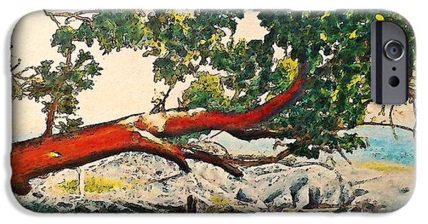Overhang Digital iPhone Cases - Arbutus Over Beach iPhone Case by Stanley  Funk