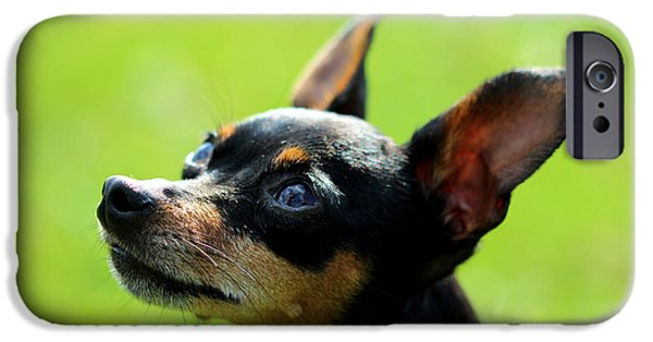 Dog Photograph Canvas iPhone Cases - Archie iPhone Case by Chris Whittle