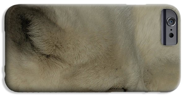 Arctic Dog iPhone Cases - Arctic Fox iPhone Case by Ernie Echols