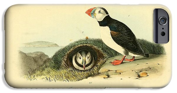 Arctic Drawings iPhone Cases - Arctic Puffin iPhone Case by Philip Ralley