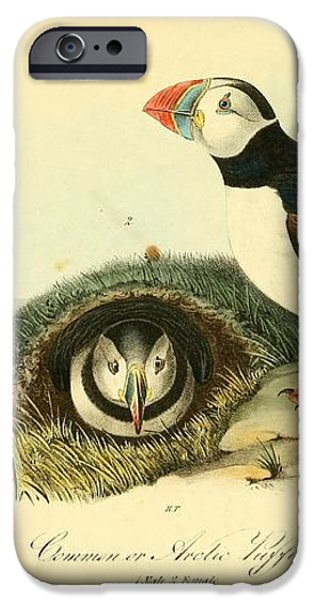 Arctic Puffin iPhone Case by Philip Ralley