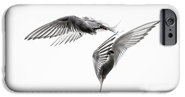 Seabird iPhone Cases - Arctic Tern - sterna paradisaea - Pas de deux - Black and White iPhone Case by Ian Monk