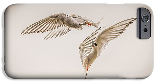 Seabird iPhone Cases - Arctic Tern - sterna paradisaea - Pas de deux -hdr iPhone Case by Ian Monk
