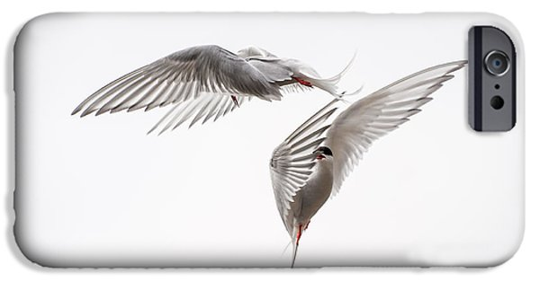 Ianmonk iPhone Cases - Arctic Tern - sterna paradisaea - Pas de deux  iPhone Case by Ian Monk