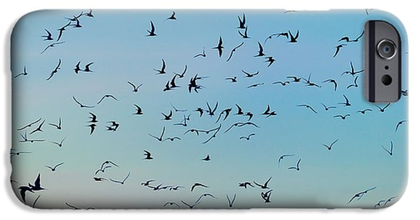Tern iPhone Cases - Arctic Terns Flying, Reykjavik, Iceland iPhone Case by Panoramic Images