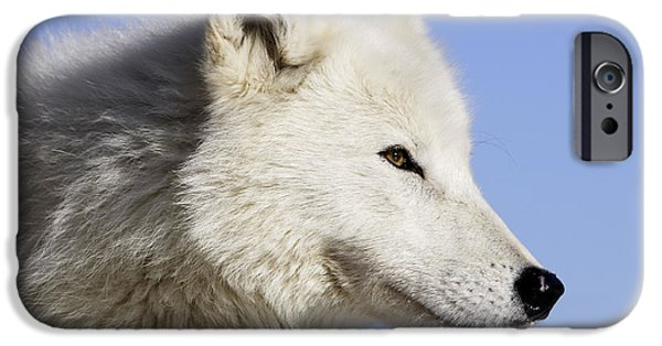 Arctic Dog iPhone Cases - Arctic Wolf, Canis Lupus Arctos iPhone Case by M. Watson