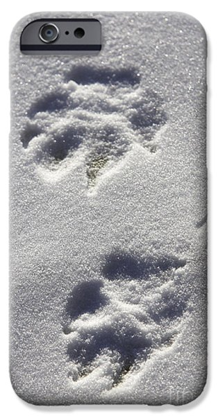 Arctic Dog iPhone Cases - Arctic Wolf Tracks iPhone Case by M. Watson