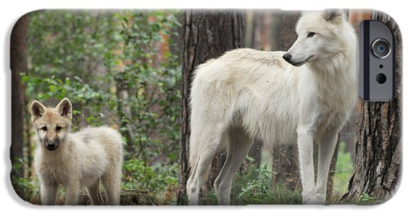 Arctic Dog iPhone Cases - Arctic Wolf With Pup, Canis Lupus Albus iPhone Case by Stefan Meyers