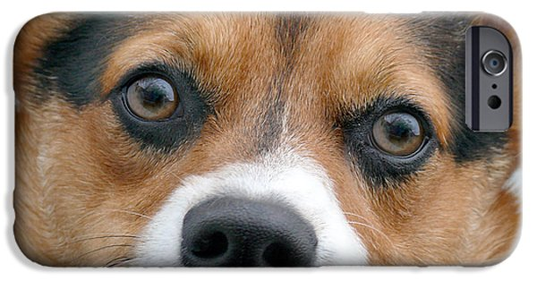 Dogs Digital Art iPhone Cases - Are You Looking At Me iPhone Case by Mike McGlothlen