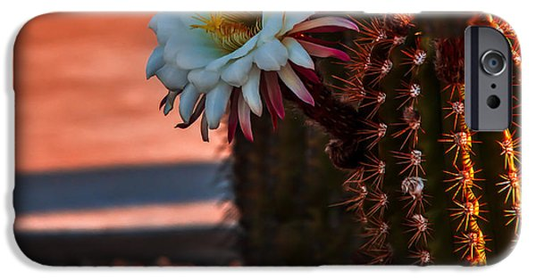 Haybale iPhone Cases - Argentine Cactus iPhone Case by Robert Bales