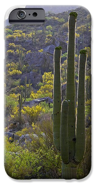 Harsh Conditions iPhone Cases - Arizona Desert iPhone Case by Samuriah Robinson