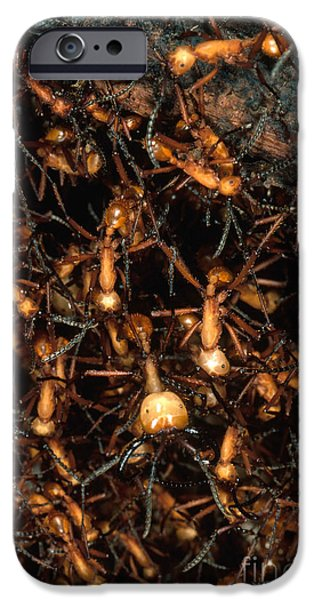 Ant iPhone Cases - Army Ant Bivouac Site iPhone Case by Gregory G. Dimijian, M.D.