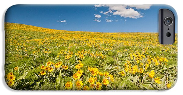 Field. Cloud iPhone Cases - Arrowleaf Balsamroot iPhone Case by William H. Mullins