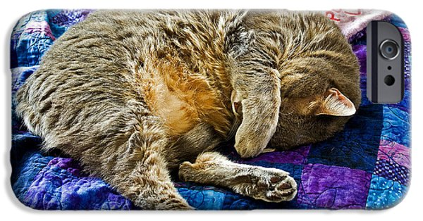 Domestic Short Hair Cat iPhone Cases - Cat Nap iPhone Case by Tim Buisman