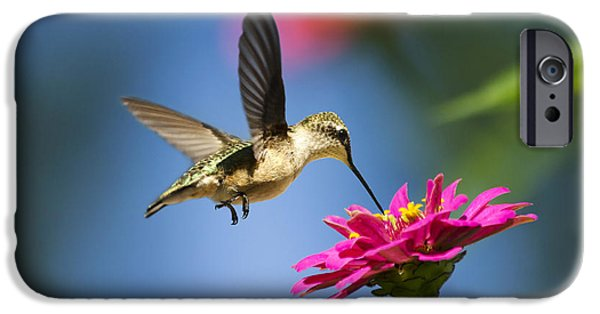Animals Photographs iPhone Cases - Art of Hummingbird Flight iPhone Case by Christina Rollo
